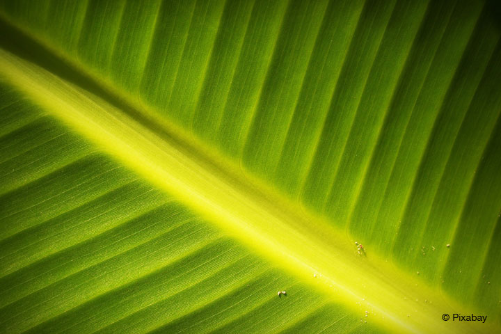 BMBF unterstützt Forschungsprojekt zu Biomasse aus Mikroalgen.