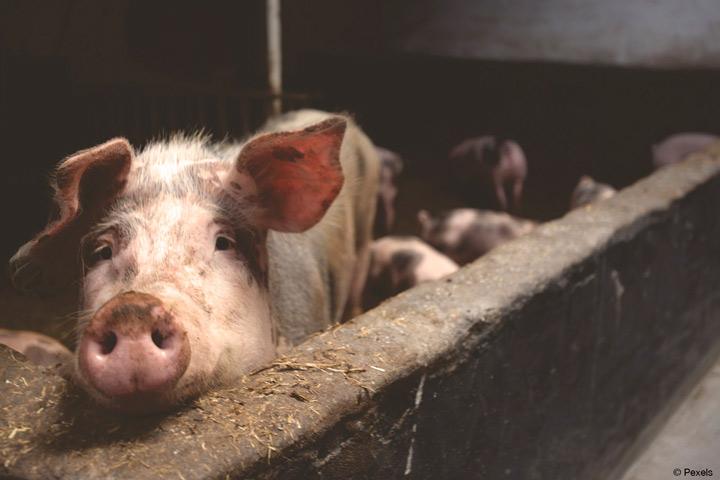 FH Südwestfalen startet Projekt zur Prävention und Reduktion von multiresistenten Erregern für Mensch und Tier (Bild: pexels).