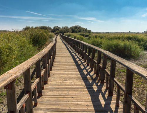 Brücken in Holzbauweise
