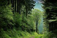 Projekt WEGBAR der FH Münster will Natur barrierefrei erlebbar machen (Bild: Pexels).