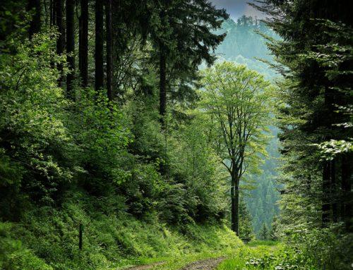 Natur barrierefrei erleben