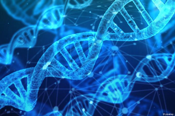 Erfolg für die Stammzellforschung an der H-BRS: Die Hochschule Bonn-Rhein-Sieg ist Gründungsmitglied des neuen Vereins Stammzellnetzwerk.NRW (Bild: pixabay).