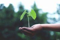 Projekt der Hochschule Bonn-Rhein-Sieg prüft bestehende Modelle der Landwirtschaft auf ihre Nachhaltigkeit (Bild: Pexels).