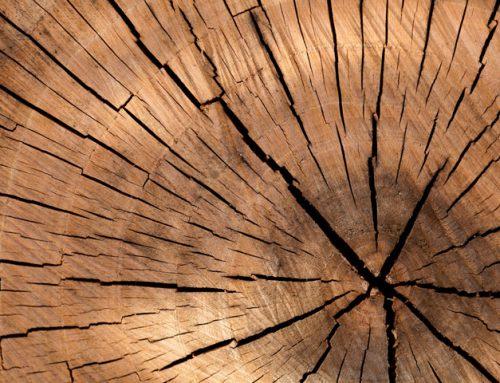 Holzzellen als Vorbild für Kühlung von E-Autos
