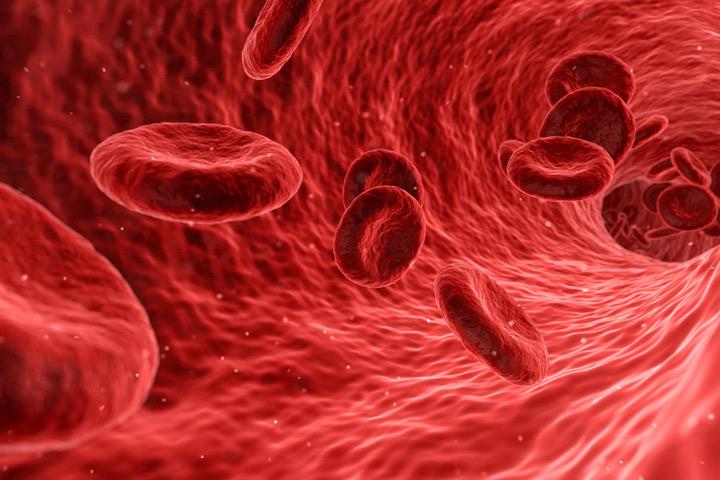 Thrombozyten im Blutgefäß