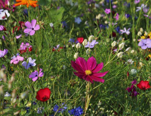 Insekten als Indikator in Sachen Biodiversität