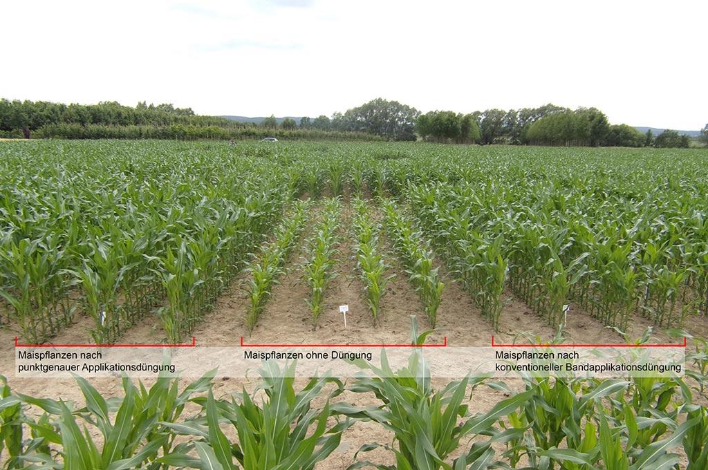 Vergleich der Feldversuche anhand von Mais. (Max Bouten | TH Köln)
