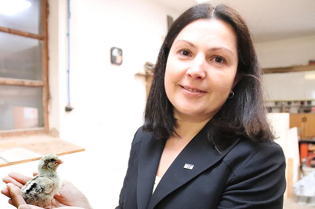 Männliche Küken: Professorin entwickelt Methode um das Geschlecht im Ei zu bestimmen.