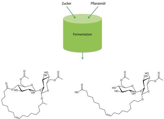 Schematische Darstellung der Herstellung von Sohorolipiden in lactonischer (links) und acidischer (rechts) Form.