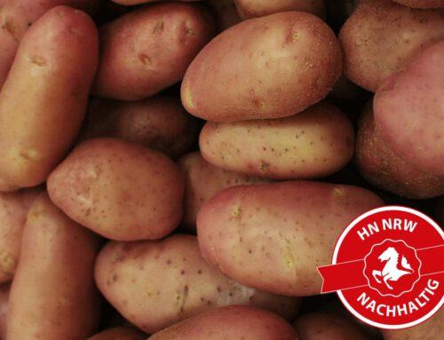Kartoffelkrebs