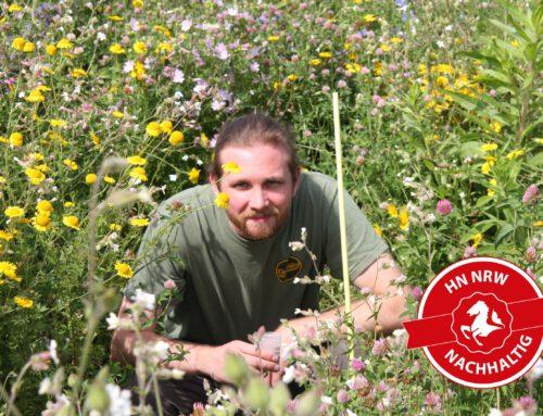 Blühstreifenmischung für heimische Insekten