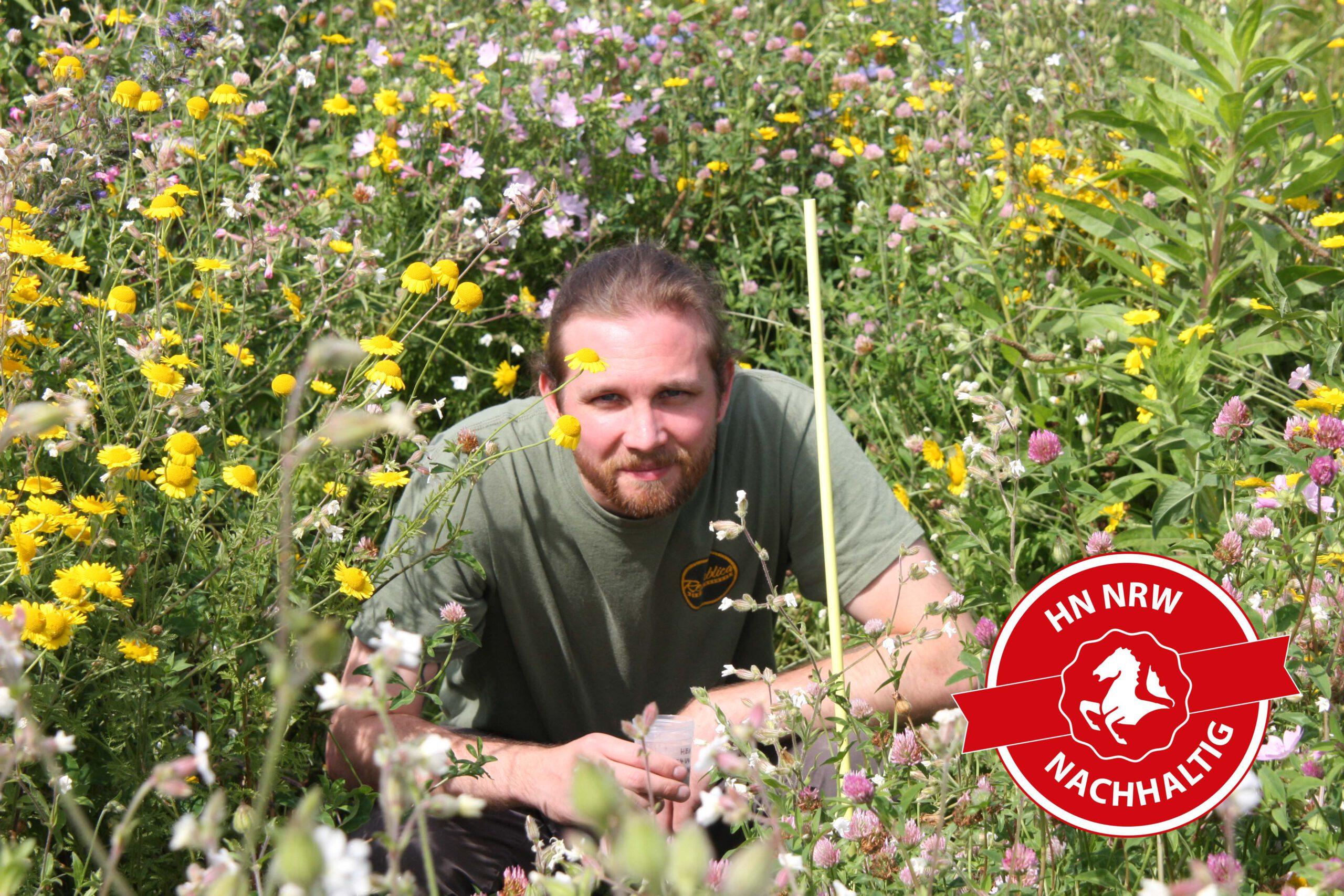 Simon Blümel hat für sein Forschungsprojekt NuBiBlü nützliche Insekten in verschiedenen Blühstreifen im Blick